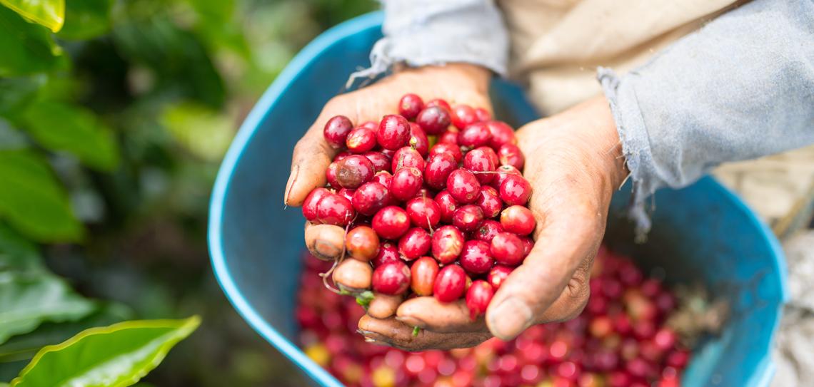 ¿Sabes cómo llegó el café a Colombia?